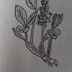 Лекарственные и ядовитые растения Удмуртии