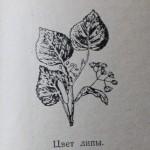 Лекарственные растения Удмуртии
