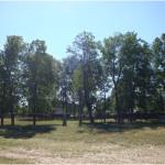 Липовый парк в Кокмане