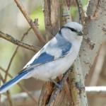 Птицы Удмуртии (с фото)