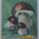 Съедобные грибы России и Удмуртии