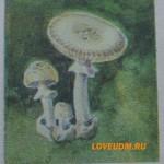 Несъедобные грибы России и Удмуртии