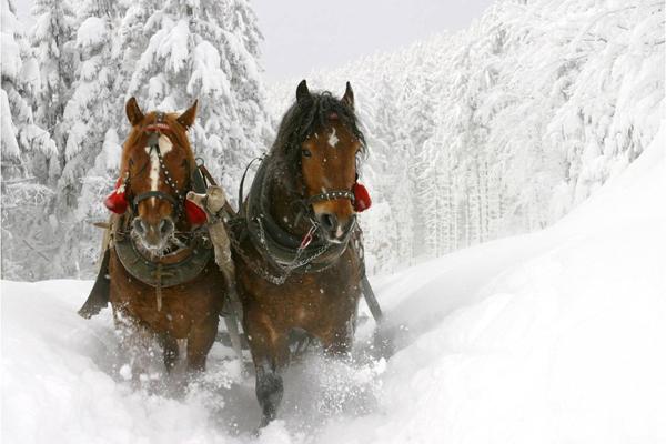 болгуры катание на лошадях