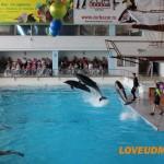 Океан на ладошке — Отзывы о дельфинарии в Набережных Челнах