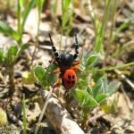Животные книги Красной книги Удмуртии – пауки и пиявки