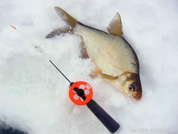 уроки рыбалки на леща