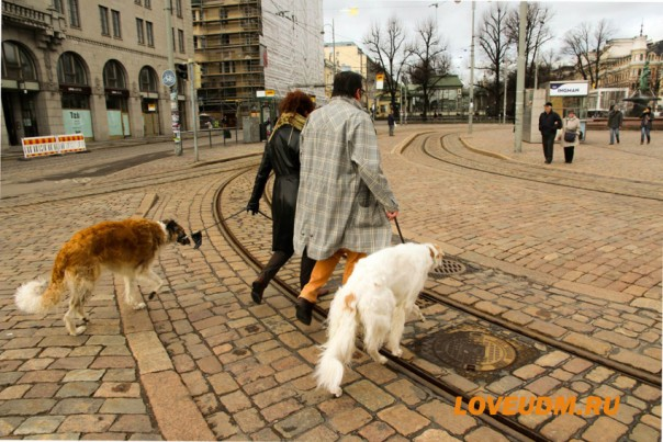 мостовая и собаки