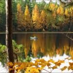 Особенности ловли на лесном озере