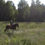 Конные прогулки – обзор мест, где можно покататься на лошадях в Удмуртии